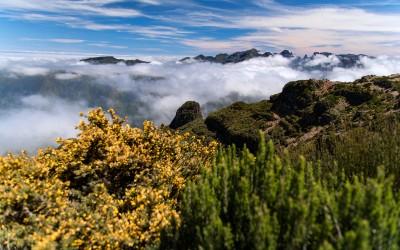 Pico Madeira 14