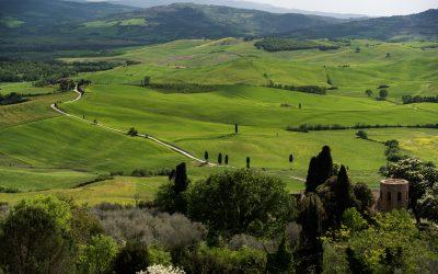 De-Cypresses-Pienza